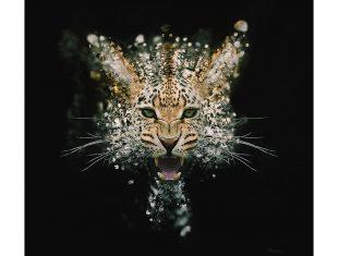 Mik Strevens' Leopard Face Dispersion