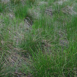a lawn of lush grass